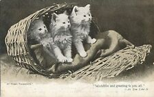 POSTCARD    CATS   At Home   Thursday's