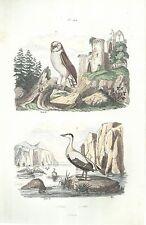 STAMPA ORIGINALE ACQUERELLATA_E. GUERIN_ uccelli _ oiseaux _PRIMO '800 _ PL. 144