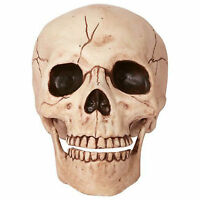 15cm Halloween Party Horror Skeleton Gothic Human Head Skull Prop Decoration