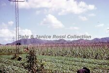 HK128 Single 35mm Slide 1962 New Territories Rice Fields,  Hong Kong China