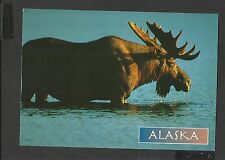 Alaska Joe Colour Postcard Bull Moose Alaska unposted