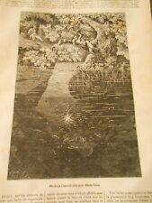 Gravure 1886 - Pêche à l'électricité aux Etats Unis