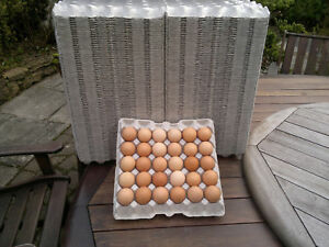 154 x GREY CARDBOARD EGG TRAYS (HOLDS 30 EGGS) SUITABLE FOR CHICKEN MEDIUM/LARGE