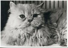 POSTCARD CARTE POSTALE / PHOTO SITTING PRETTY / LONDON / CAT CHAT