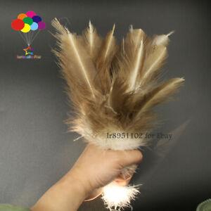 100 pcs Precious Beautiful Velvet 8-12 inch / 20-30cm Decorative Feathers