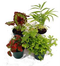"Garden Plants Terrarium & Fairy 5 Live Plant in 2"" Pots Best Gift"