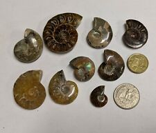 120 Million year old FOSSIL AMMONITE COLLECTION From Madagascar (#B90)