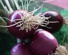 """SALATZWIEBEL """"Purpura"""" 50 Samen  mild und würzig Zwiebel optimal für Salat"""