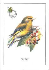 FDC 2461 - Oiseau Buzin sur gravure format A4 !