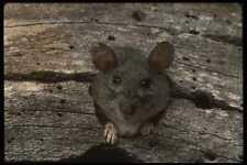 041072 BOIS rat A4 papier photo