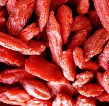 Lycium barbarum - Goji - 200 semillas - seeds  - Graines - Semi - Bio huerto