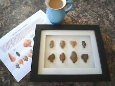Paleolithic Arrowheads in 3D Picture Frame, Authentic Artifacts 70,000BC (Y006)