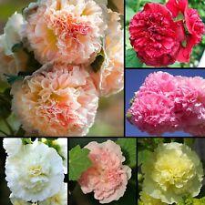 Gefüllte Stockrose Mix 30 Samen  - Alcea rosea  - Malve - winterhart - Hollyhock