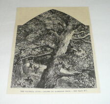 1878 magazine engraving ~ The Squirrel Hunt ~ Drawing by Harrison Weir
