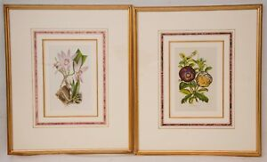 PAIR of Framed 1862 REPRODUCTION Antique Botanical Prints Horto van Houtteano