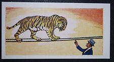 Tightropes Walking Tiger   Circus Act      Superb Illustrated Card  VGC / EXC