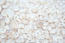 Real Shell Jewelry Making Supplies 1.4lb Assorted Lot of Mixed Limited Old Stock
