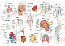 Anatomy & Physiology Flash Cards - Paramedic, ECA, Student, Responder, Ambulance
