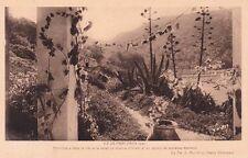 PORT-CROS paysage fleurs citation henry bordeaux photo yvon