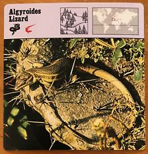 """ALGYROIDES LIZARD"", 1977 EDITIONS RECONTRE COLLECTIBLE 4 3/4"" x 4 3/4"" CARD"