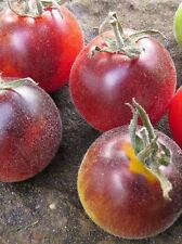 Fluffy tomato / Tomato seeds collection Woolly Kate from Ukraine / 20 SEEDS