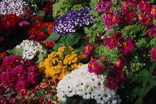 753079 Floral Display In Niagara Parks Greenhouse Niagara Falls Ontario Canada A