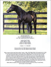 Race horse MALIBU MOON Thoroughbred picture biography unique collectible
