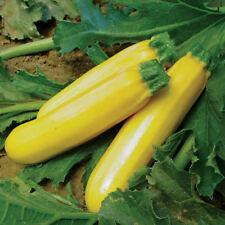 Yellow Courgette Zucchini Seed Heirloom Vegetable Organic Pumpkin Cucurbita Sold
