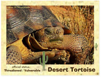The Desert Tortoise, an Endangered Animal Postcard by PostcardsToSaveThePlanet.