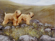 More details for soft coated wheaten terrier scwt dog art limited edition print -