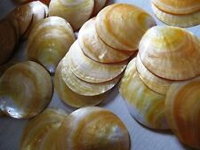 4 inches Mother of Pearl Shells round shape 100 pcs Wow !