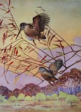 1940s print Woodcock by Francis Lee Jaques