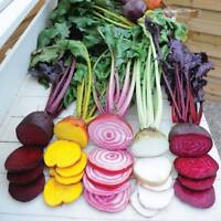 50PCs Seeds Beetroot Mixed Blood Yellow White Heirloom Home Garden Vegetables