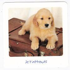 CHIEN  Chiot   CHIENS  carte postale   n°  FFU 0045  Je t'attends