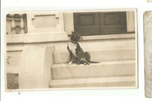 PHOTO PIT BULL BOSTON TERRIER DOG NOT SURE