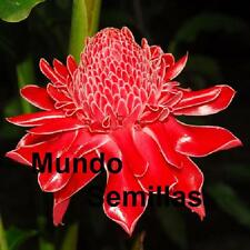 ETLINGERA  Elatior  ROSA  PORCELANA color ROJO 10 Semillas Seeds