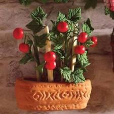 Juicy de plants de tomates dans un pot en terre cuite, maison de poupées miniatures jardin plantes