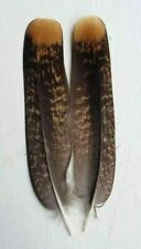 Fly tying / Native crafts / art - Spruce Grouse female tail feathers