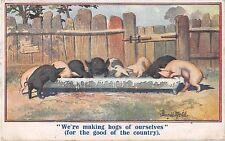 POSTCARD   COMIC    DONALD  McGILL   Pigs  Related.....