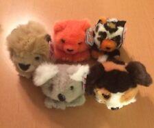 5 Swibco Puffkins: Mango, Aussie, Sherlock, Callie, and Lancester