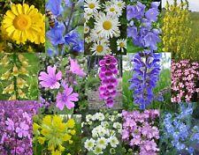 Inverno duro crisantemi colorata Mix in mind .8 varietà perenne TG XXL 8,5cm 10x