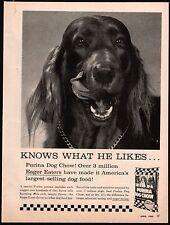 1960 IRISH SETTER Licking His Chops Purina Dog Food Vintage Photo AD