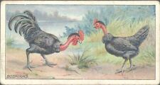 Ogdens - Poultry, 2nd Series - 27 - Bosnians