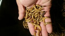 100 Live Super Worms - Live Delivery Guarantee - Free Shipping