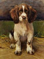 English Springer Spaniel Puppy  Dog Puppy Dogs Puppies Vintage Art Poster Print