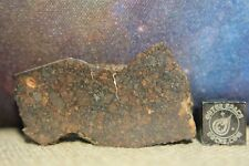 NWA 10699 LL(L)3 Primitive Chondrite Meteorite 7.1g part slice of very rare type