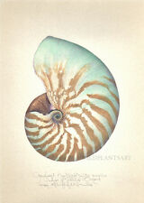 Ocean NAUTILUS SEASHELL -THE ORIGINAL limited edition handworked SIGNED print
