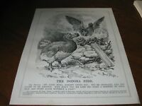 1928 Original POLITICAL CARTOON - Rising PHOENIX BIRD Talks to DODO BIRD Extinct
