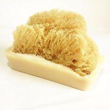 Sea Sponge in a Goat's Milk Soap Large Handmade Bars    TEA TREE  Essential Oil