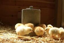 Booklet Guide - Beginners Guide to keeping Laying Hens
